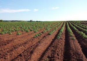 potato field-cultivate 1628500_1920 - Pixabay