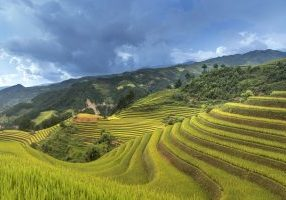 rice terraces-vietnam-3059666_1920 - Pixabay